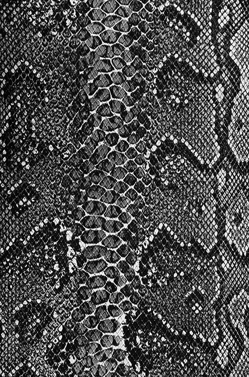 Black and white snake camera cover