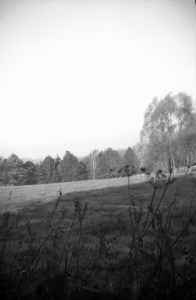 A vintage negative of a tree line found in an old contact printing frame